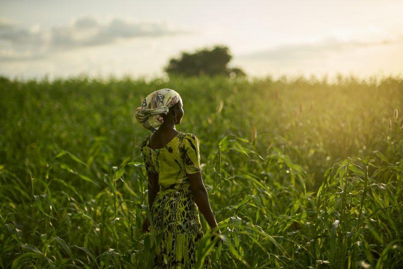 Au Ghana, Oxfam mène des projets de long terme pour soutenir l agriculture