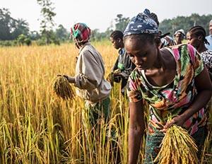inegalites de genre et insecurité alimentaire les femmes en première ligne